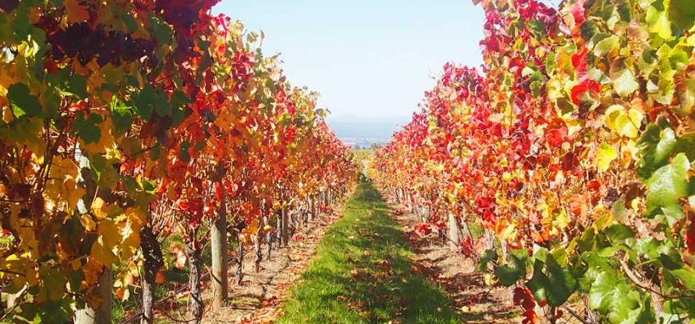 Wine Lovers - Luxury Destinations | Adagold Aviation | Adagold Luxe | Jet-Centric Experiences | Travel Australia