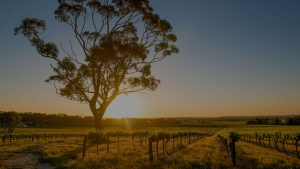 Barossa Valley Wine Lovers - Luxury Destinations | Adagold Aviation | Adagold Luxe | Jet-Centric Experiences | Travel Australia