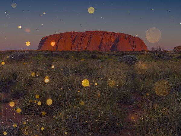 Experience the Field of Light at Uluru