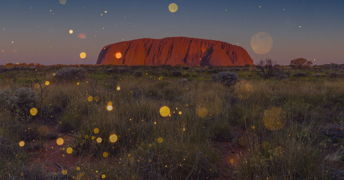 Experience the Field of Light at Uluru