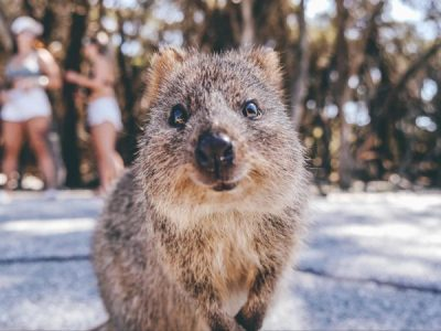 Australia's Cutest Animals & Where to Find Them
