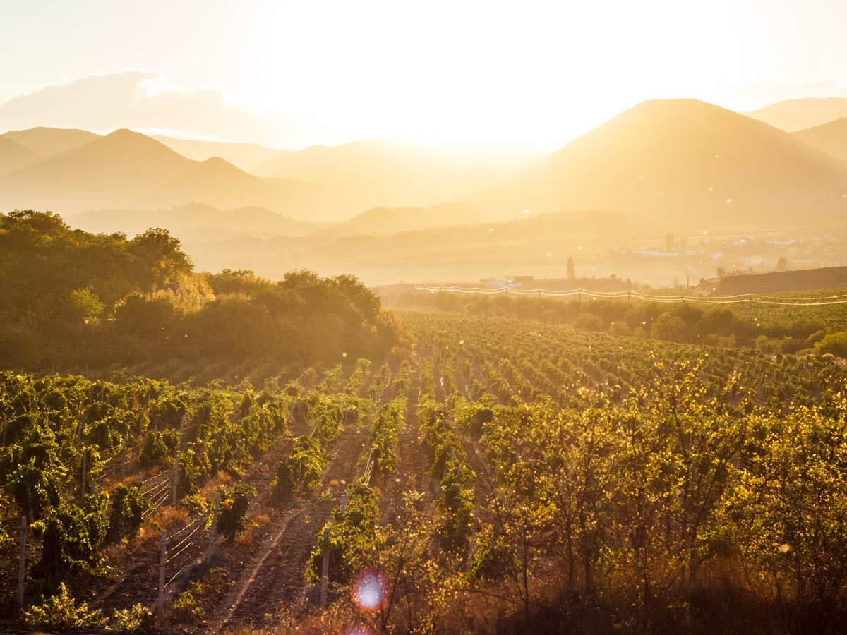 barossa | visit the barossa | winery