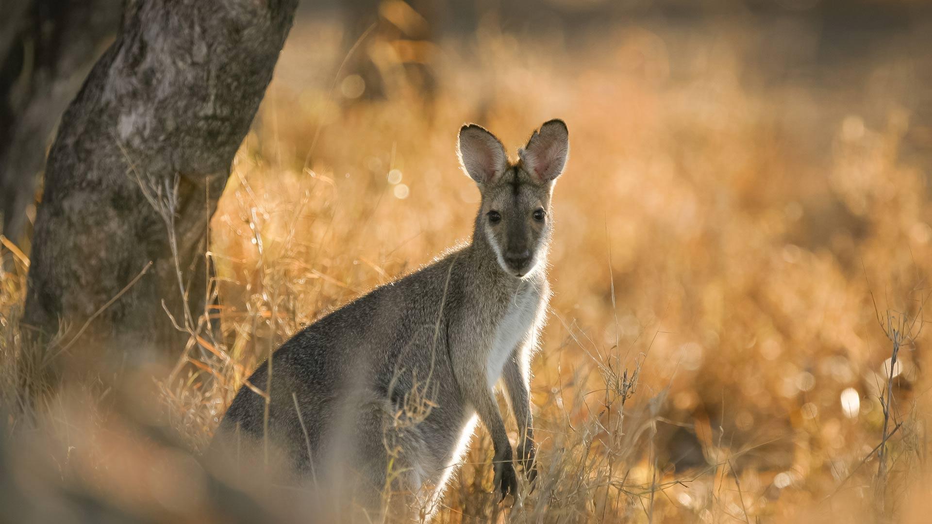 Australian Wildlife | Western Queensland | Day trip | Australian Outback
