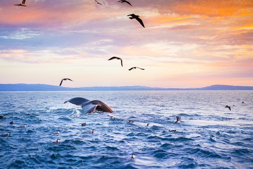 fraser-island-experience