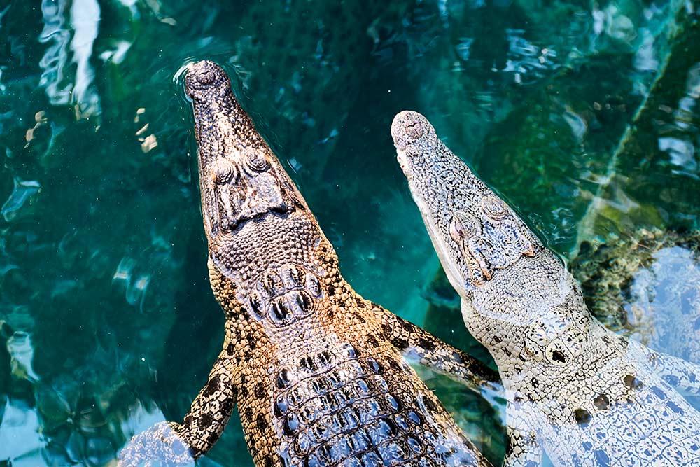 warm weather fishing experience saltwater crocodile